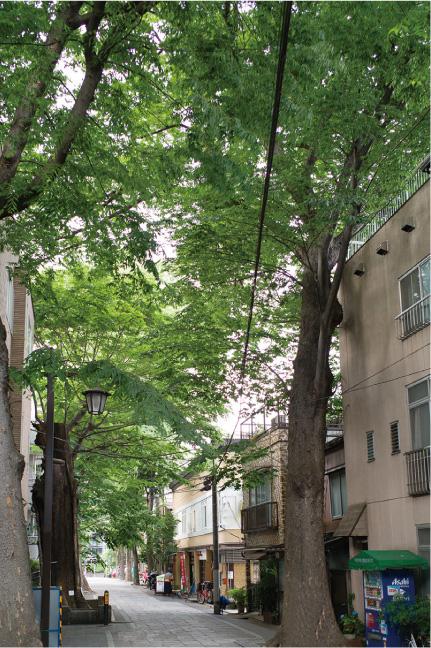 鬼子母神大門ケヤキ並木 | 小石川・雑司が谷散策コース | 東京都文化財めぐり
